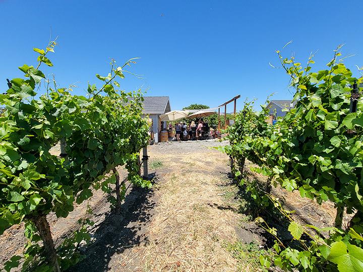 Piedra Creek Winery in San Luis Obispo