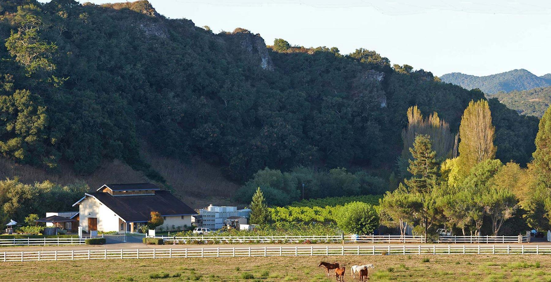 Chamisal Vineyards in Edna Valley