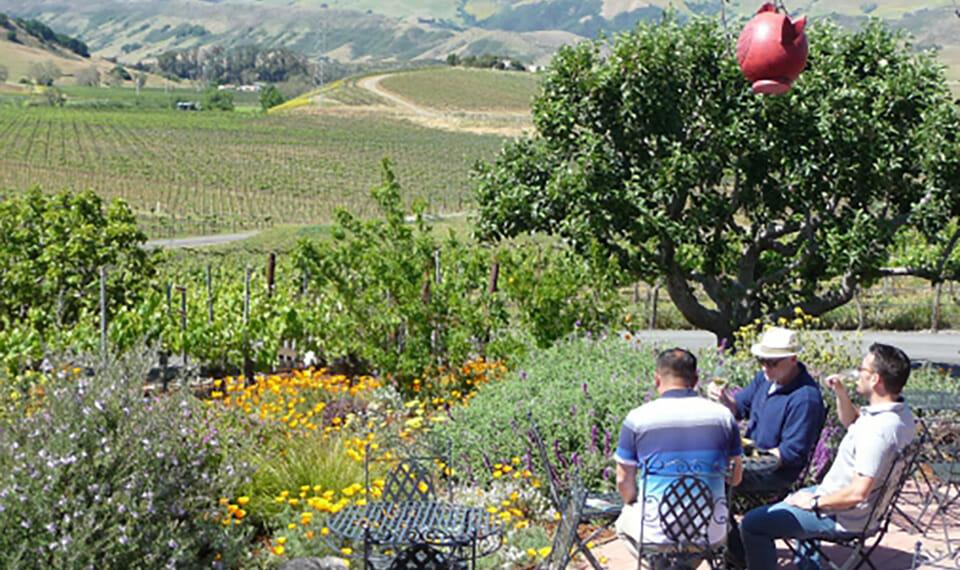 Wolff Vineyards in SLO Coast Wine country