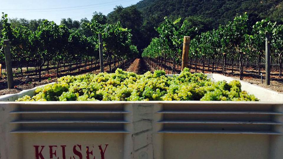 Kelsey See Canyon Vineyard in Avila Beach, San Luis Obispo Coast