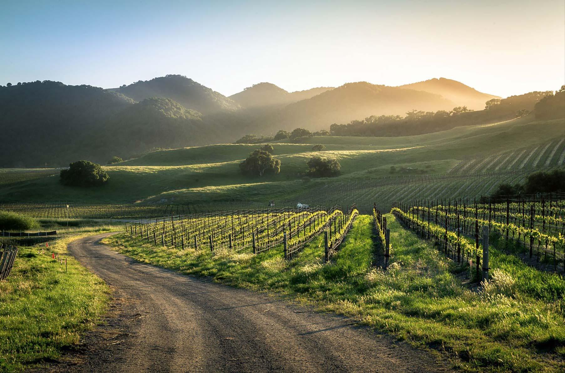 Oceano Wines on the San Luis Obispo Coast