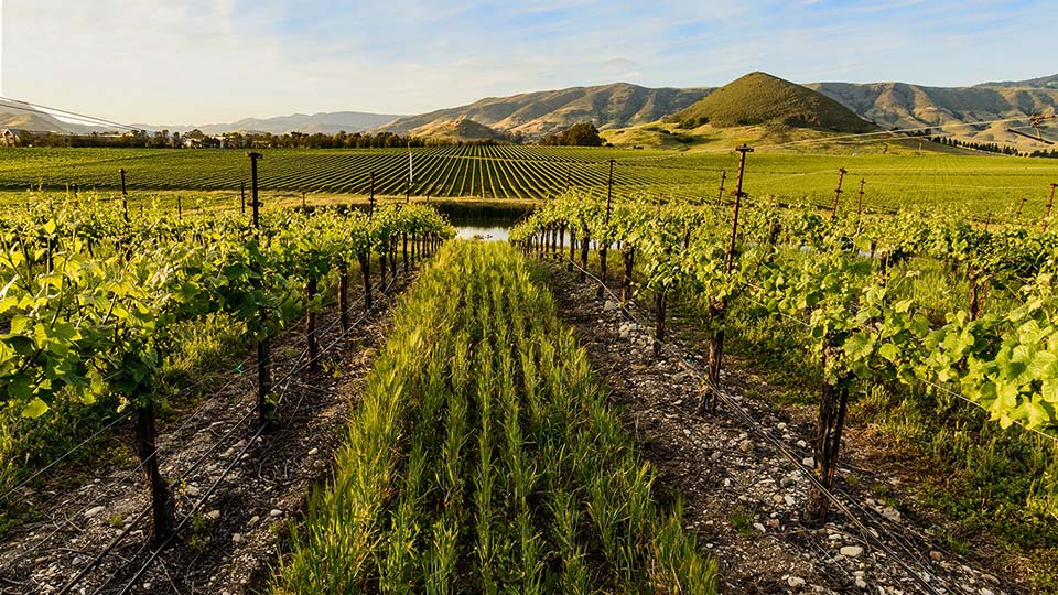 Sustainable Wine Trail on the SLO Coast in San Luis Obispo Wine Country